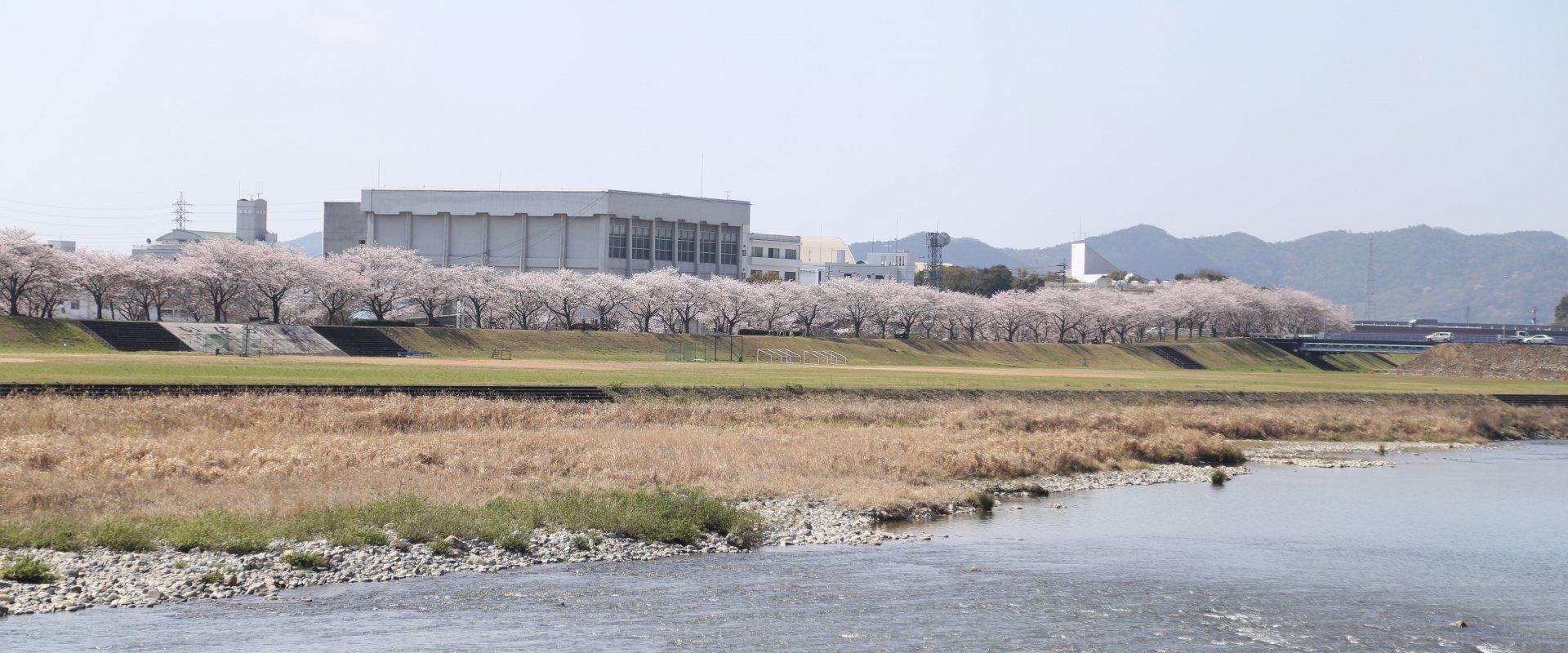揖保川/Ibo River